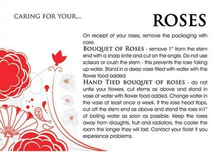 Care Cards Roses (pk100) thumbnail